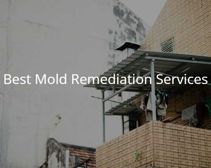 Best Mold Remediation Services